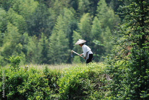 Woman working in a rice terrace