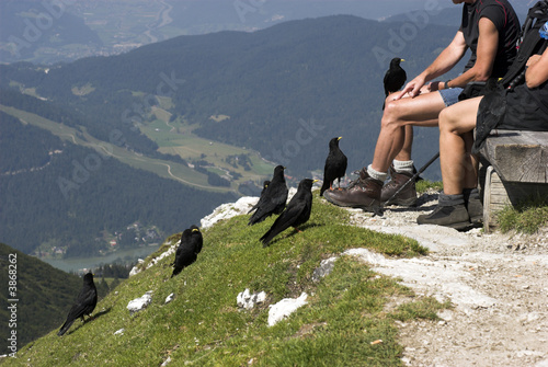 Sitting with Birds on Alp Top