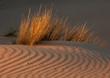 Grass and dune