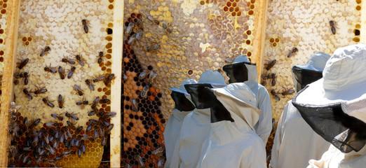 visite des ruches 2