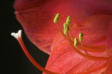 Closeup, Flower inside