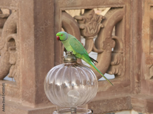 Parakeet in a Lamp in the hotel