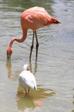 PINK FLAMINGO FLORIDA