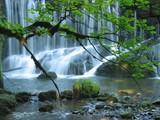 Ściana wody w lesie - 3886428