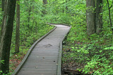 a trail in great swamp poster