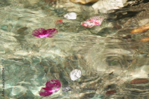 Petals Floating in the Stream