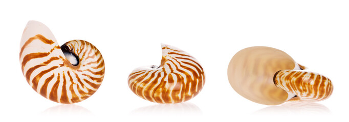 Nautilus seashells isolated on white background