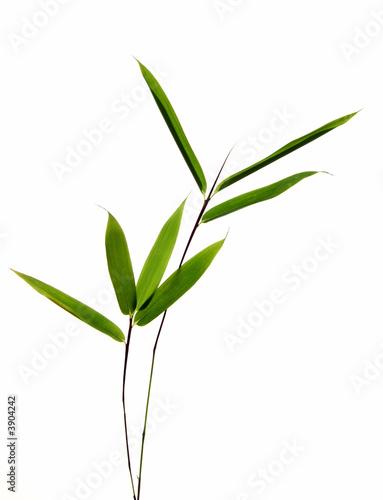 sieben bambusbläter an zweigen, isoliert vor weiss