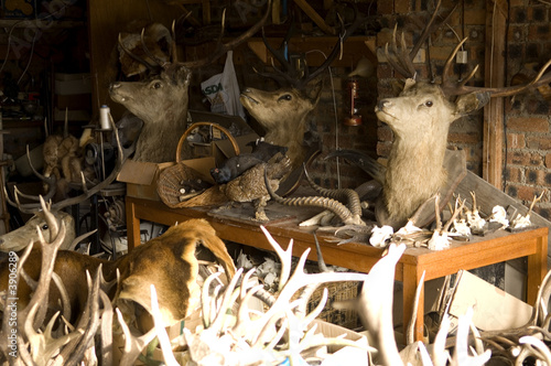 Some deer trophy's in a stuffer's workshop