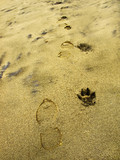 Man foorprints and dog paw prints along on the sand surface poster
