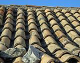 dalmatian roof poster