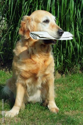 poster of golden retriever -  assistant  mailman