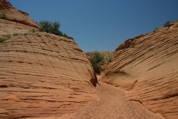 Wüste, Arizona
