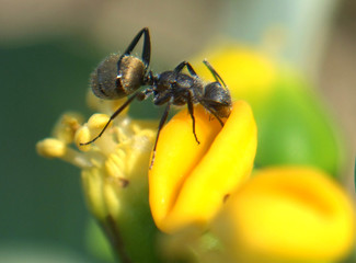 Close up of an ant