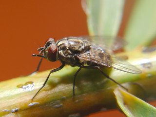 Isolated fly