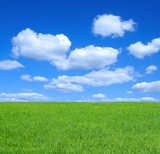 empty summer meadow against summrer sky with cumulus clouds poster