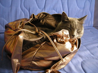 adorable cat sleeping in a  handbag