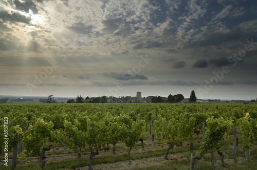Vineyards near Bordeaux with an evening sky