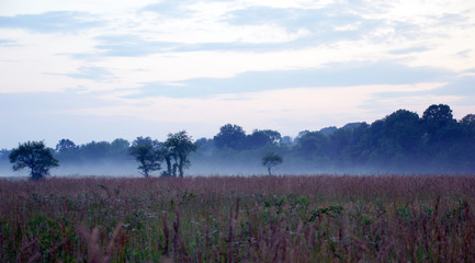 Foggy fields