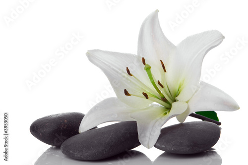 Leinwandbild Motiv madonna lily and spa stone