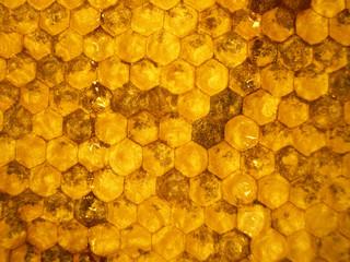 honeycombs 1