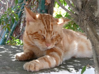 Cat sleeping siesta in Sant Joan