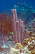 Underwater Bonaire: Sponges and Corals