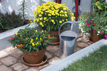 Pepper,daisies and watering-can