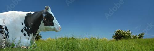 Leinwanddruck Bild Vache couchée dans le pré