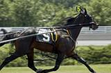 five horse winning poster