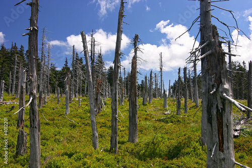ruined forest (damaged by frosty wind) and blue sky with clouds