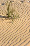 Sharp shadows on sand. poster