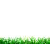 Fototapety Grünes Gras