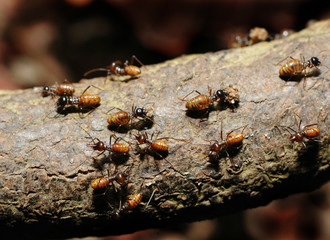 busy ants on an old wood log