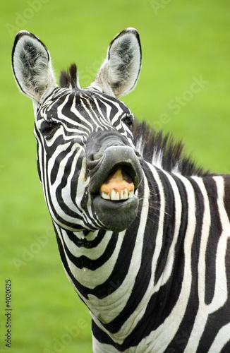 Papiers peints Afrique du Sud zebra