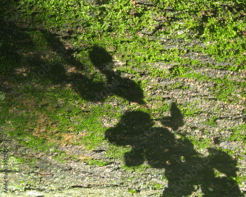 canvas print picture shadow in a park