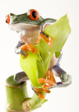 Fototapety Frog on bamboo