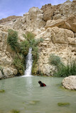 desert oasis in the dead sea region poster