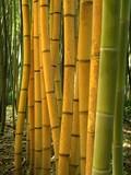 Fototapety Bambus 05