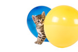 stripped kitten and two ballonns poster