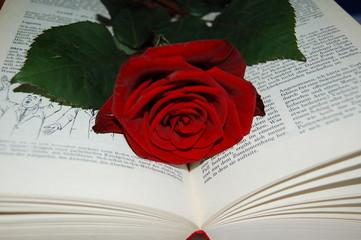das Liebesbuch