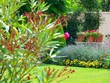 Jardin coquet
