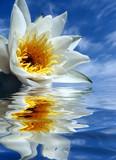 Fototapeta odbicie - niebo - Kwiat