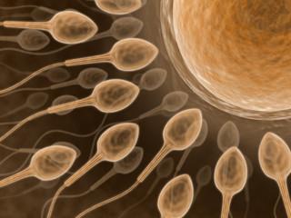 Sperm (Close up)