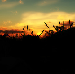 Grass Sunset 5