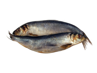 salted herring