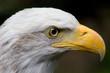 Eagle Glare
