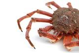 Fototapety crabe araignée isolée sur fond blanc