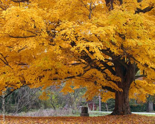piekne-drzewo-koloru-jesieni