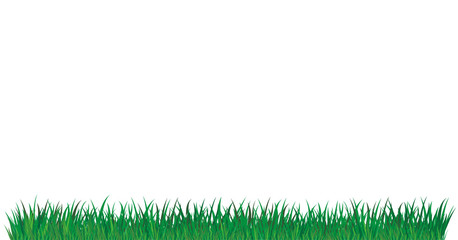 Green grass of different shades 2